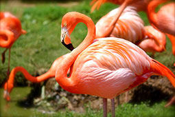 Flamingo's, ezeltjes en struikrovers